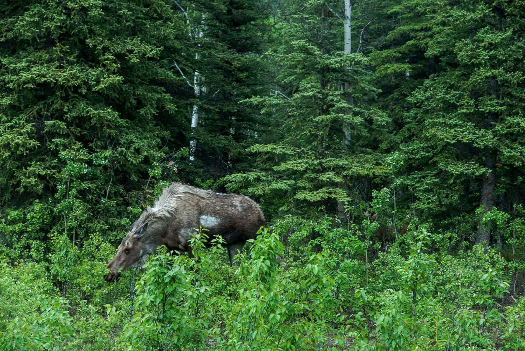MichelAycaguer-Alaska bleu gris vert-2010-22