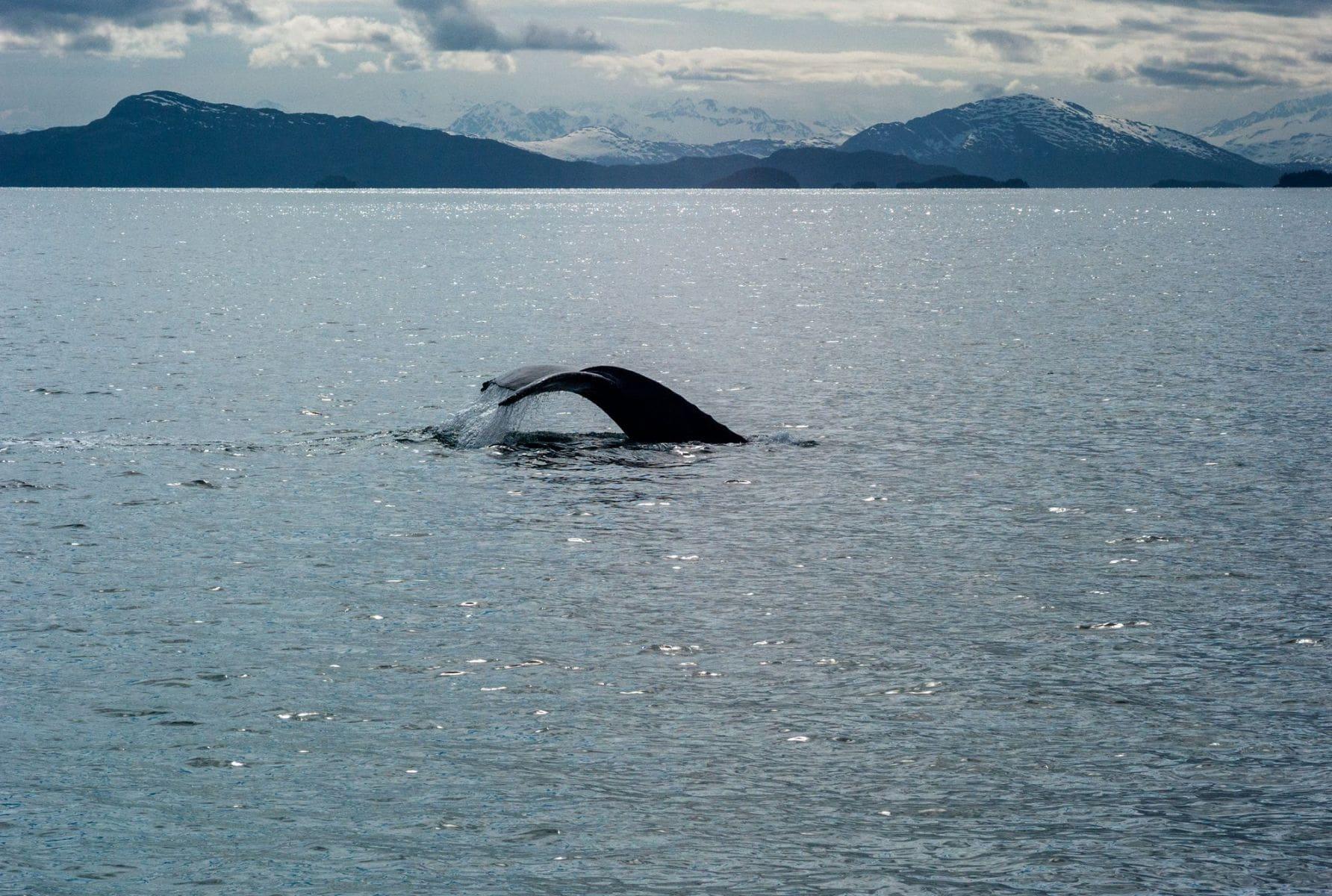 MichelAycaguer-Alaska bleu gris vert-2010-45