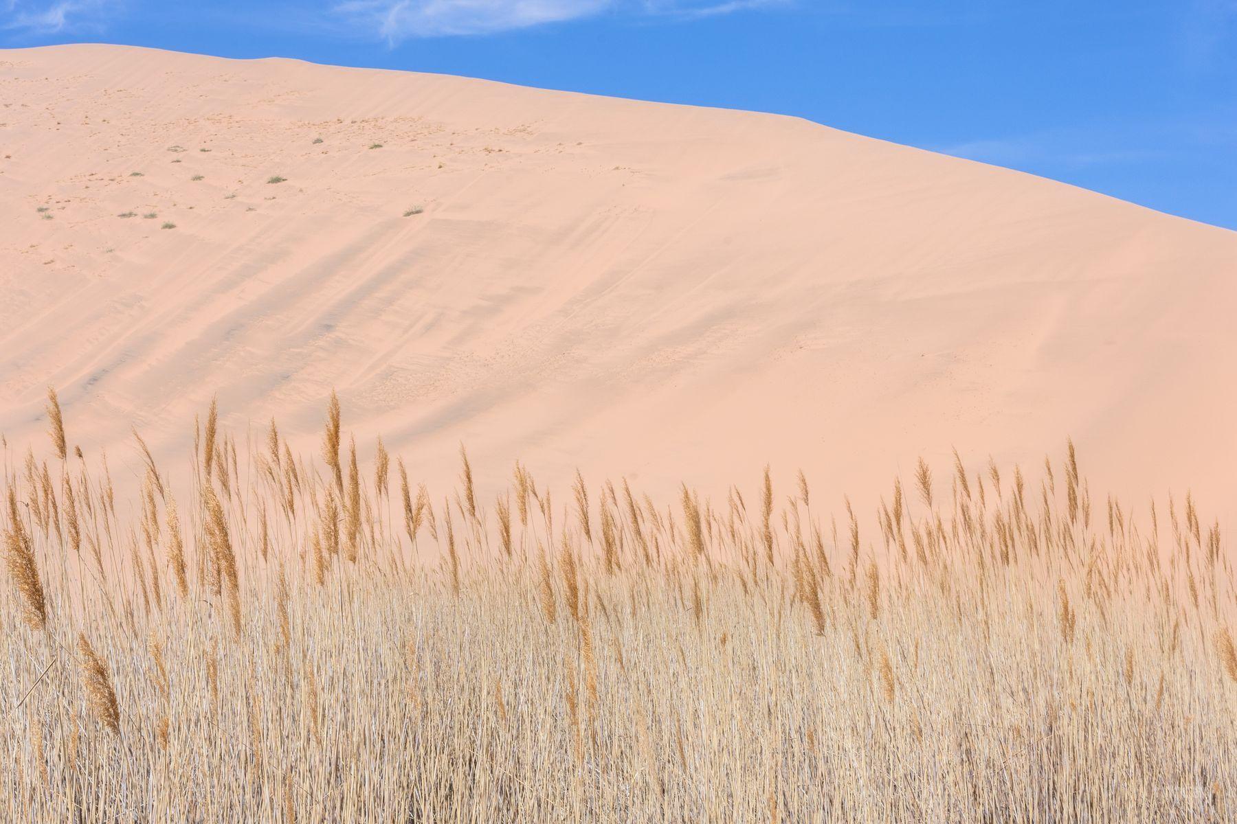 1_MichelAycaguer-Chine-Desert-BadainJaran-Dunes-Chameaux-MongolieInterieure-1