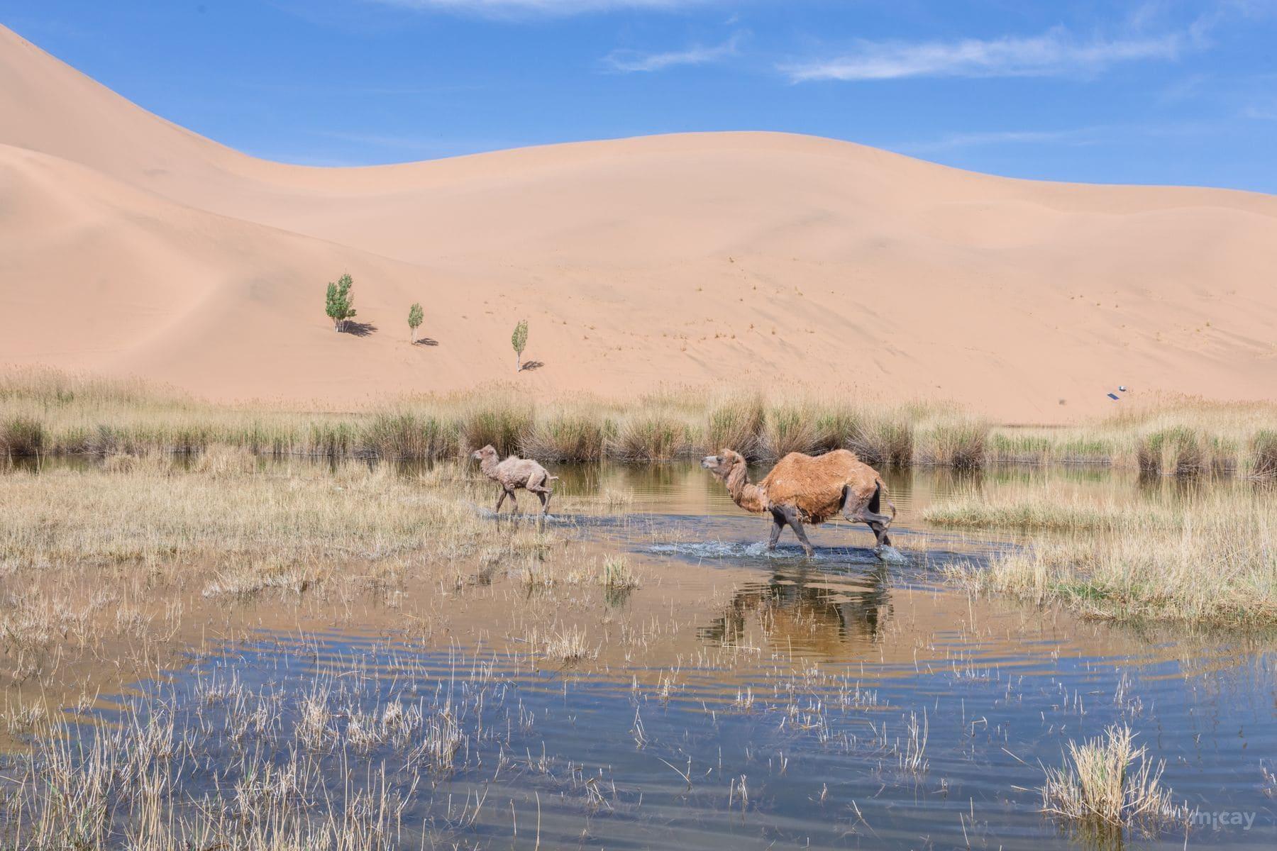 MichelAycaguer-Chine-Desert-BadainJaran-Dunes-Chameaux-MongolieInterieure-2